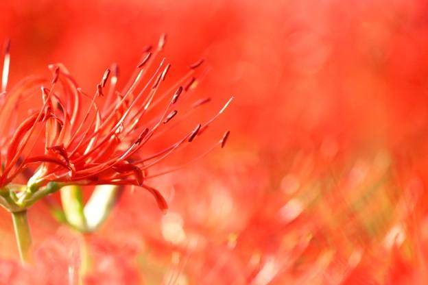 写真: 紅の炎