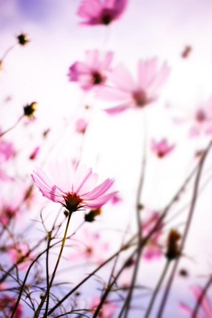写真: 空に憧れて