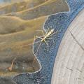 写真: カメムシの類の幼虫か:12月下旬に撮りました←7