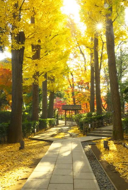 写真: モミジの大田黒公園