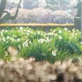 写真: 春の予感