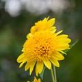 写真: 黄色い花