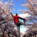 写真: 舞。櫻花
