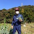 写真: 収穫2