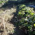 写真: のほほん農園7