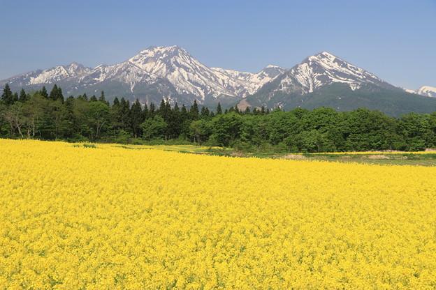 妙高山と菜の花畑