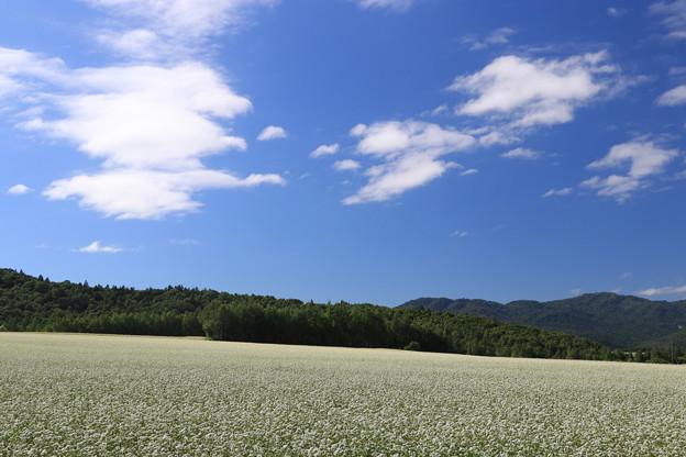 Photos: 白絨毯の畑