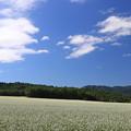 白絨毯の畑