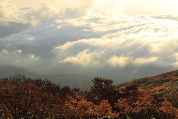 写真: 雲海と紅葉