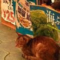 写真: 市場のネコ。ポスターが逆さ...