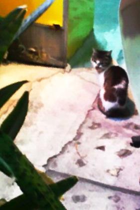 写真: 飲食街のネコは人慣れしてるな