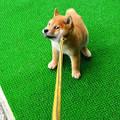 写真: 一瞬目つきが鋭くなった仔犬さん