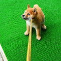Photos: 一瞬目つきが鋭くなった仔犬さん