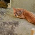 暑さで不機嫌そうな猫の横を通過した