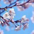 写真: 春になる。