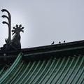 湯島聖堂 (2)