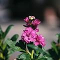 紫のお花♪
