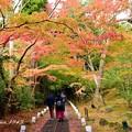 写真: 円通院 山道