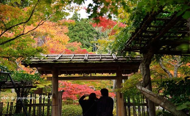 写真: 松島円通院 紅葉