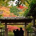 松島円通院 紅葉