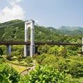 Photos: 風の吊り橋
