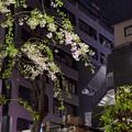 Photos: 歌舞伎町にて