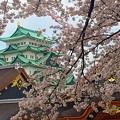 写真: お城と桜
