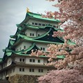写真: 桜と名古屋城