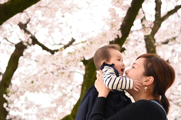 写真: はじめての桜
