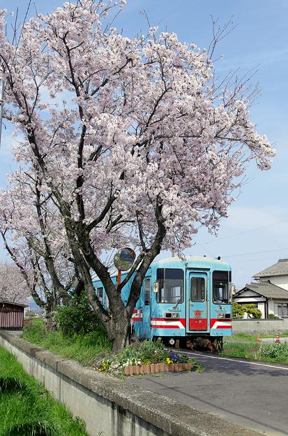 桜と樽見鉄道(1)