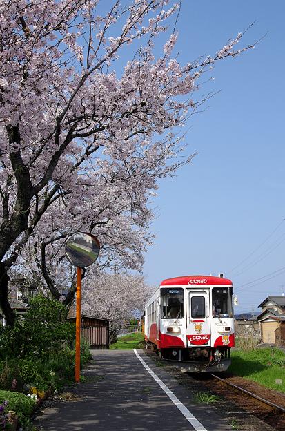 桜と樽見鉄道(2)
