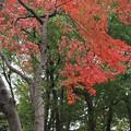 小石川庭園紅葉