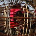 公園のジャングルジムで遊ぶ子供たち 魚眼風に