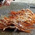 写真: 松葉ガニのタグ付け