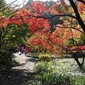 写真: 徳川園
