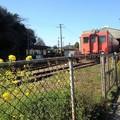 Photos: 電車と菜の花
