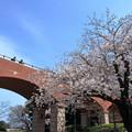 写真: 霧笛橋と桜