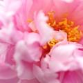 春の粧(はるのよそおい)