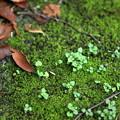 Photos: 落ち葉と苔
