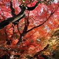 写真: 綺麗に色づく