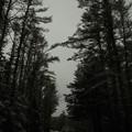 Photos: Snow... 12-13-14