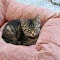 Sleepy Zippy 11-23-14