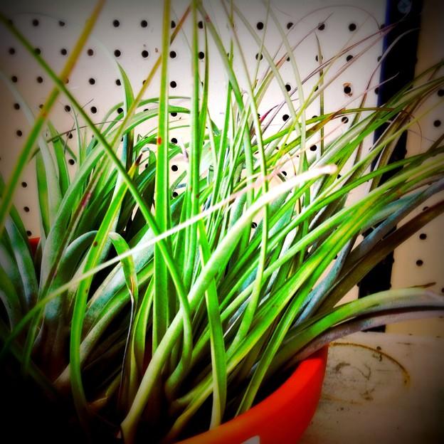 Air Plants 2-1-15