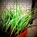 写真: Air Plants 2-1-15