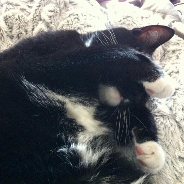 Cat Nap I 4-8-17
