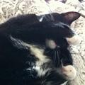 写真: Cat Nap I 4-8-17