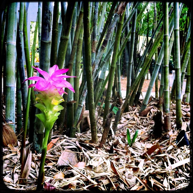 By the Bamboo Woods II 4-18-17