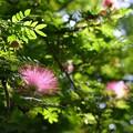 Pink Powder Puff II 7-30-17