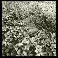 写真: Carpet 8-6-17