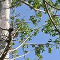 写真: Baobab 10-1-17